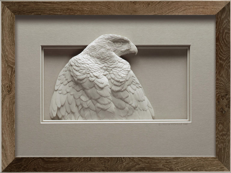 Calvin-Nicholls-Collector-S-hawk-study