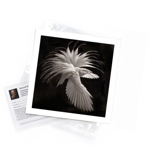 Bird of Paradise – Limited Edition Art Print
