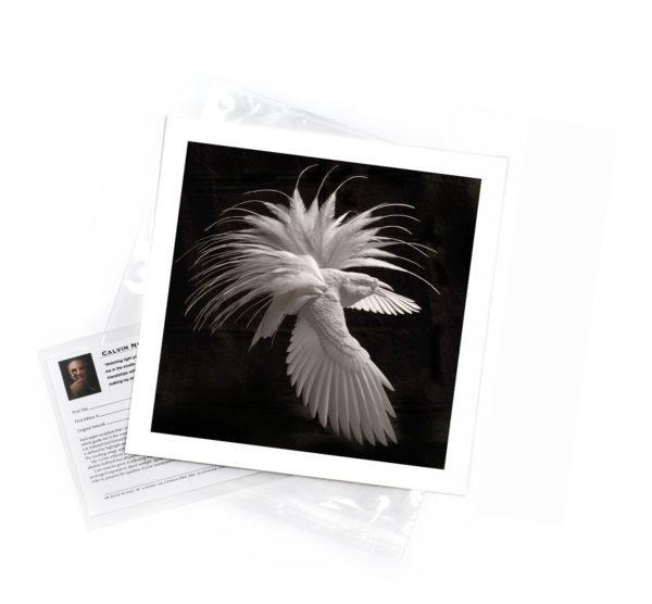 Calvin-Nicholls-print-BofP