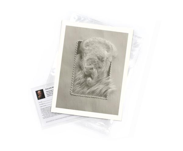 Calvin-Nicholls-print-Buffalo