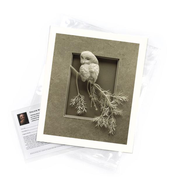 Calvin-Nicholls-print-boreal-owl-A