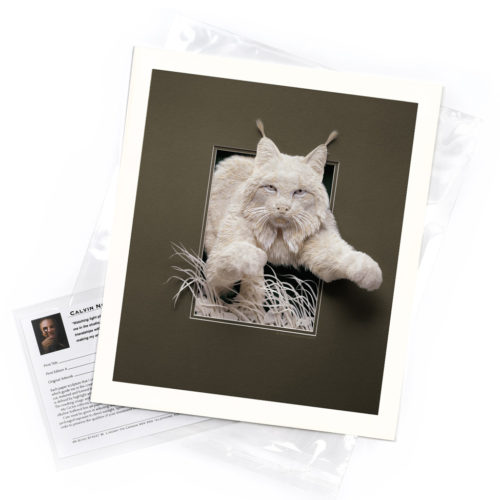 Lynx – Limited Edition Art Print