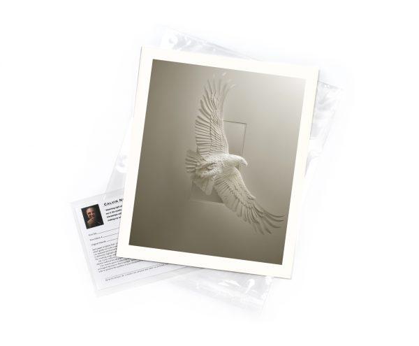 Calvin-Nicholls-print-Eagle-Soaring