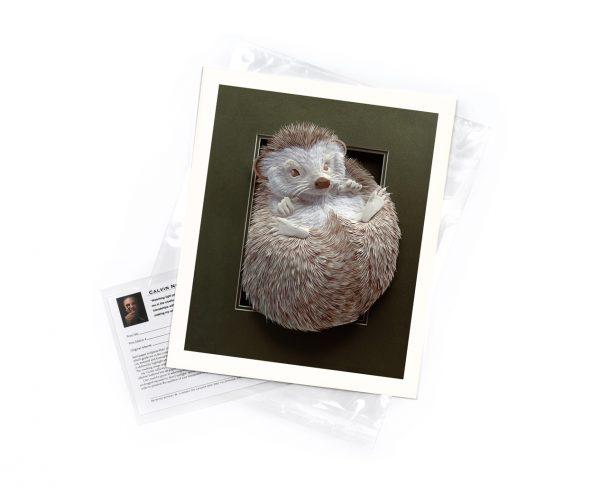 Calvin-Nicholls-print-Hedgehog