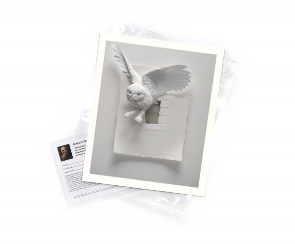 Calvin-Nicholls-print-LittleOwl