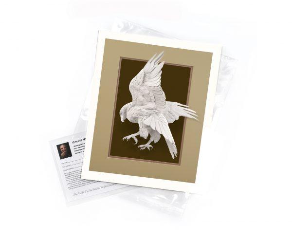 Calvin-Nicholls-print-Forty-Acres-hawk