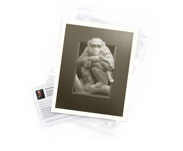 Calvin-Nicholls-print-Imp-Chimp